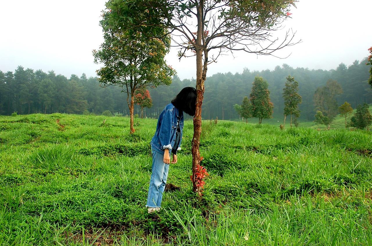 Siehst du den Wald vor lauter Bäumen nicht mehr?
